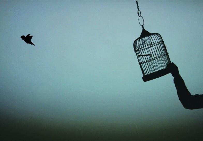 nhung con chim o ha lan